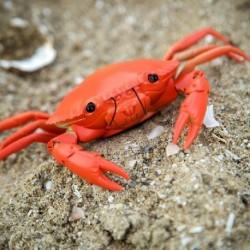Crabe télécommandé